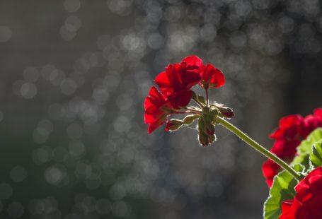 flower-892680_1920
